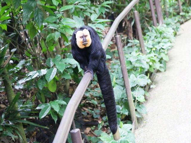 river safari Gradini si Parcuri din Singapore 5