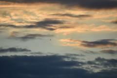 birds in the city sky