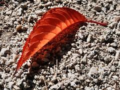 1 Sleek Leaf and Shadow 2