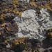 Small photo of Lecanora, Physcia, Xanthoria. Handa cliffs