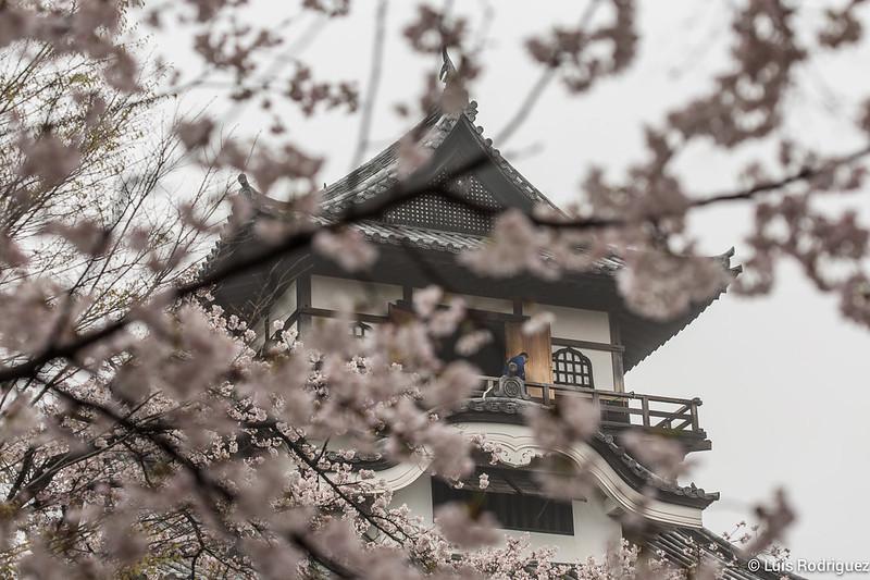 Inuyama-castillo-115
