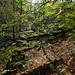 Roslin Glen forest