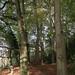Bathwick Wood