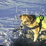 2010-12-26_10-56-04 - Maus Suche - Hund & Schnee