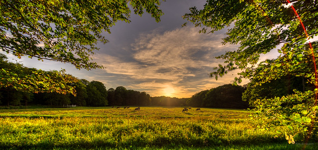 A Dutch summer sunset.
