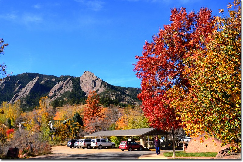 2017 Maple in Fall, Boulder, Colorado  (45)