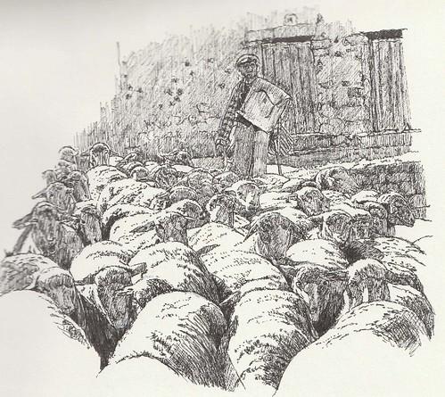 Rebaño de ovejas merinas