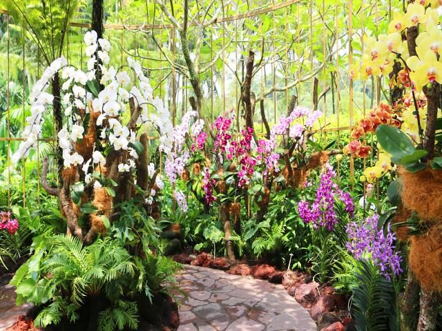 gradina orhidee Gradini si Parcuri din Singapore 5