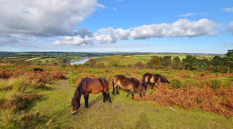 Haddon Hill - Exmoor