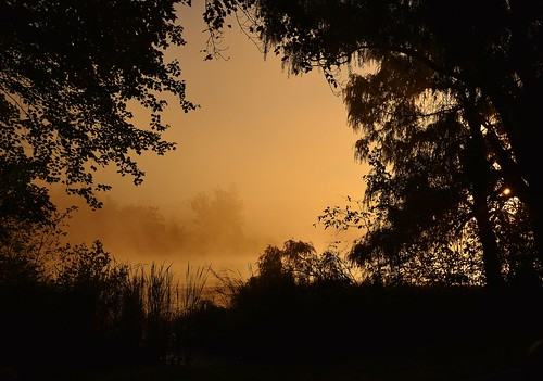 sunrise steam fog mist tree lake reichardslake reichards nikon d610 rwgrennan rgrennan ryan grennan water silhouette leaves fall morning golden nature landscape window dawn