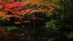 Stillness of Autumn / Kyoto Nanzen-ji Tenjyuan