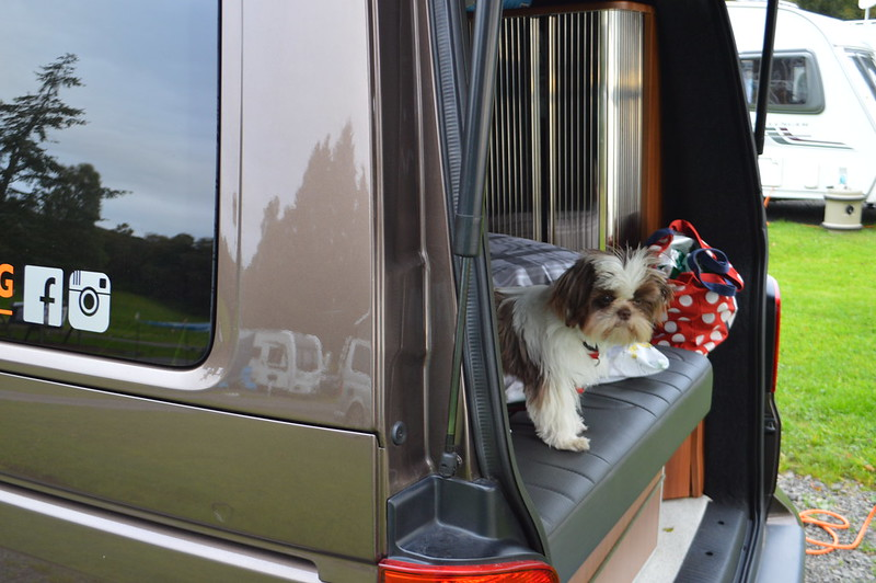 This is a photo of my shih tzu lookng out of the campervan window