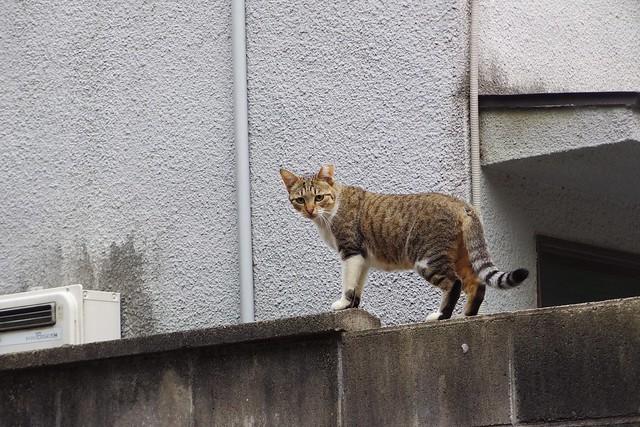 Today's Cat@2017-09-24