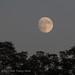 Almost Full Moon by Deborah Kral