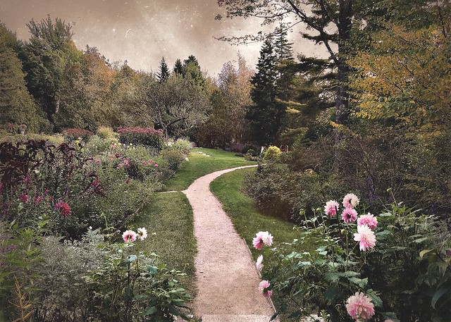The path through the dahlias, Thuya Garden