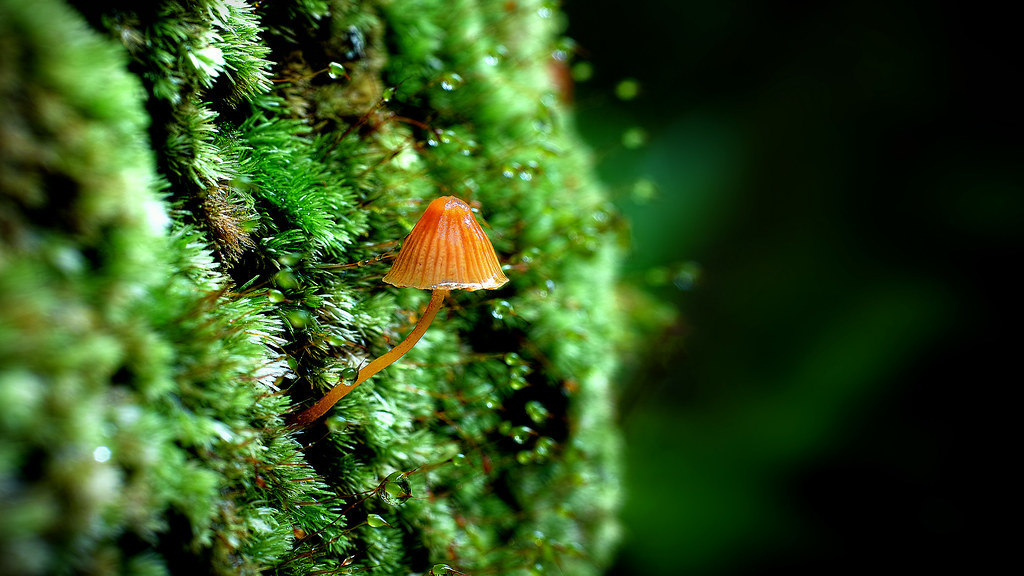 tiny mushroom in the rain