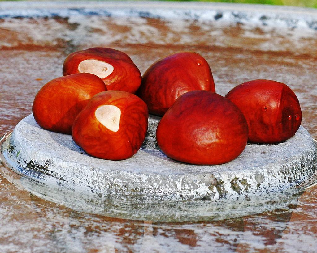 AA-Chestnut-20d_8402