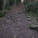 Incline-tramway for stone shipment, Bathampton Woods