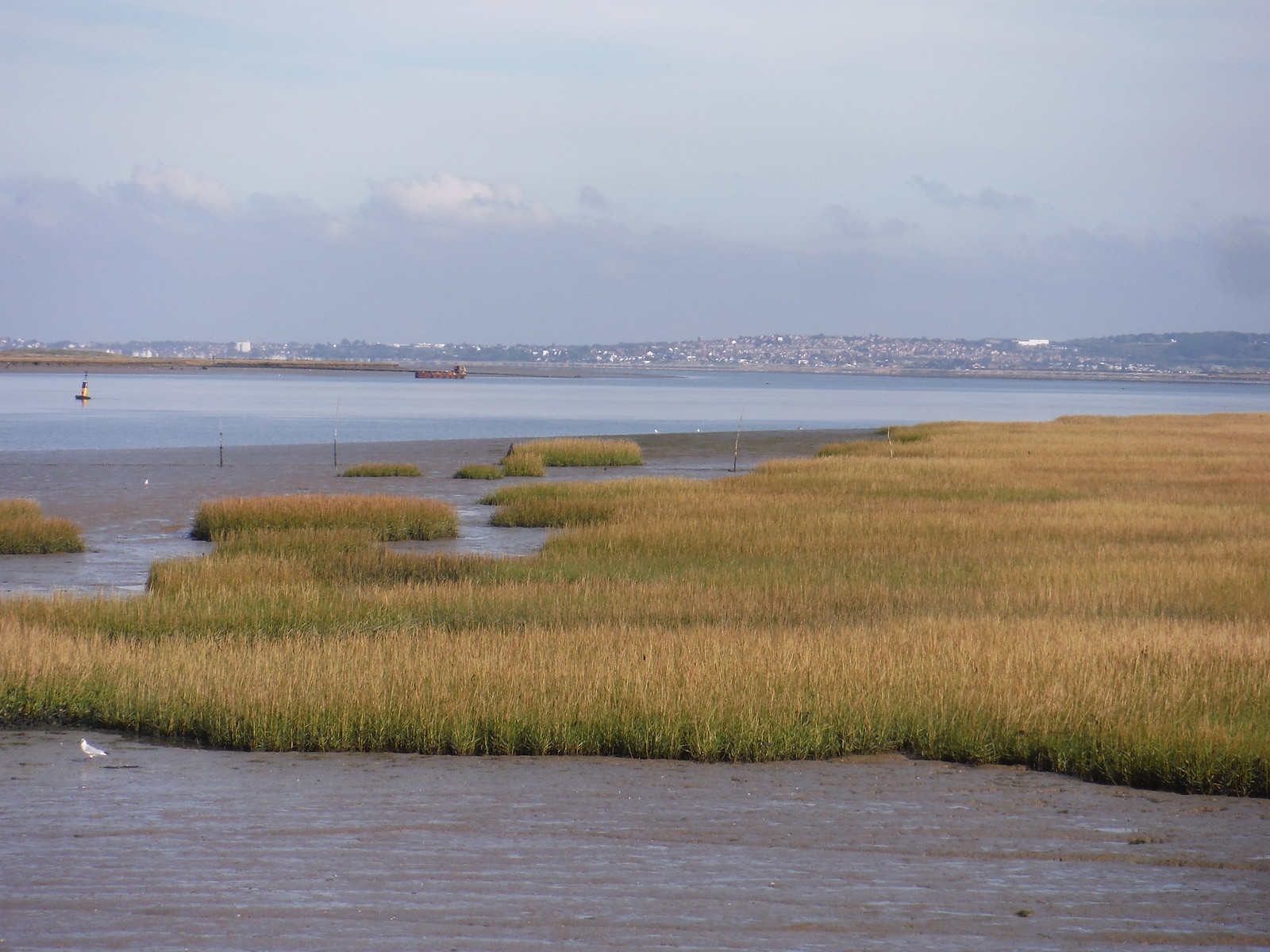 Whitstable, beyond saltmarshes SWC Walk 299 - Teynham to Faversham
