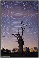 Ancient dead tree ST