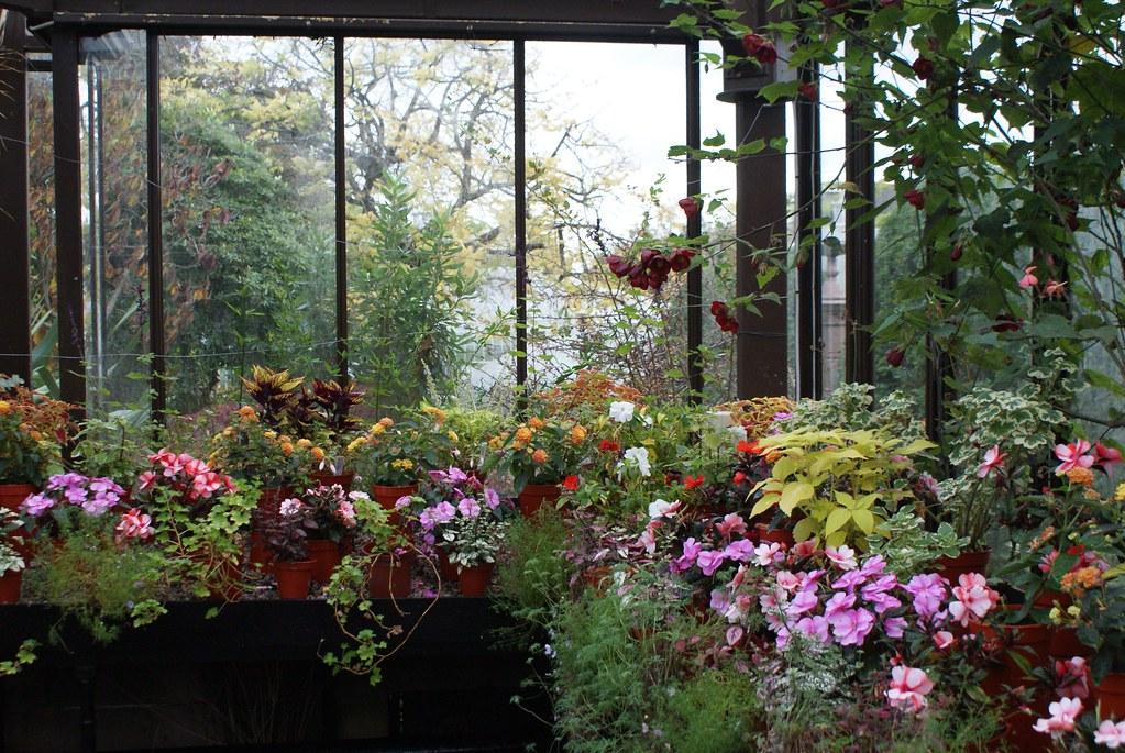 La serre des bégonias du jardin botanique de Glasgow. De quoi vous réconciliez avec ces fleurs, si vous étiez brouillé pour une obscure raison.