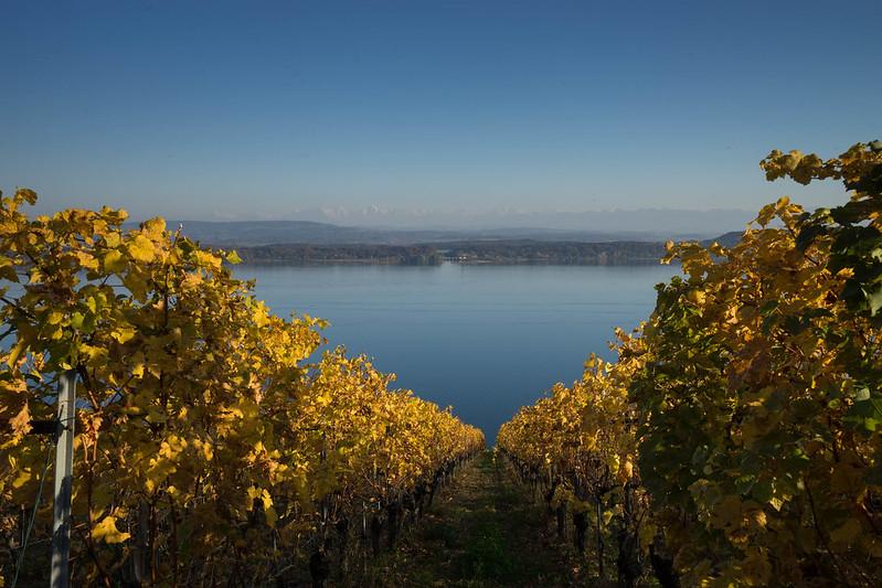 colored_vineyard.jpg