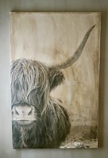Schilderij Schotse Hooglander