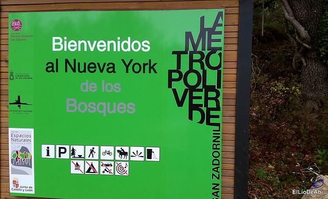 Ruta de los Castaños Centenarios en la Metrópoli Verde 2