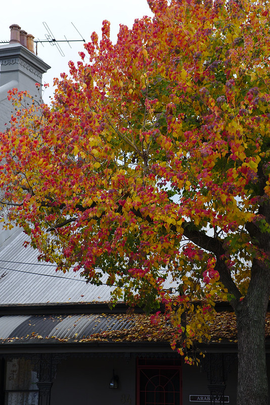 Leaves against tin roof