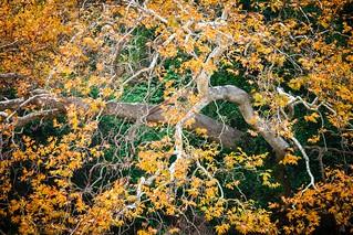Autumn Colors No 13_