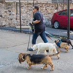 Professional Dog Walker on West 218th Street, Inwood, New York City