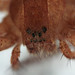 20171014_205432_spider