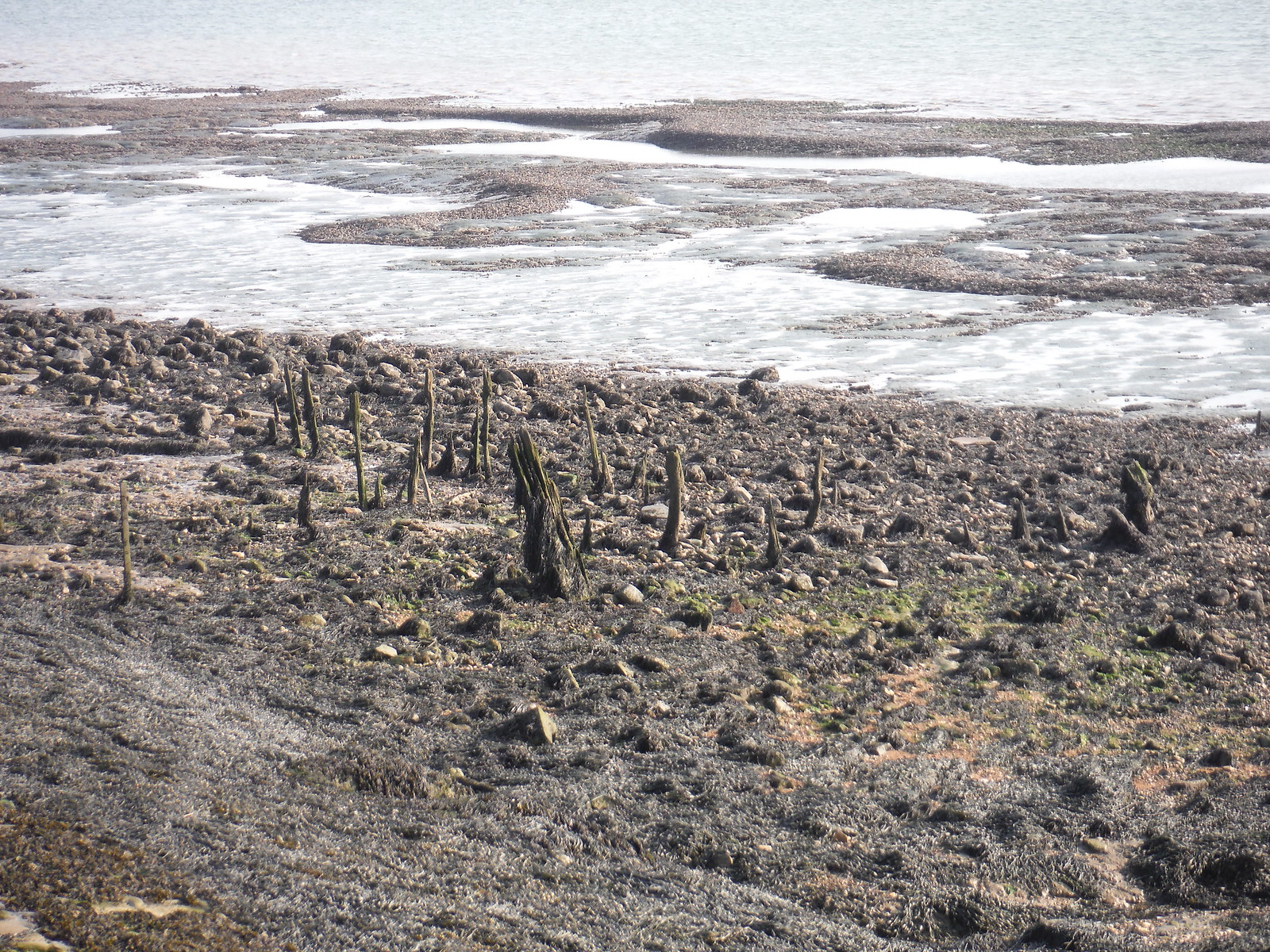 Remnants of medieval sea defences SWC Walk 162 North Fambridge to Burnham-on-Crouch