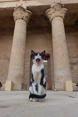 Temple by Horus, Egypt. https://t.co/37pLFDwYAl #istanbul #food #lezzet #mutfak #nefis #kebap #Tarif #yemektarifleri #foodporn #recipe #co…