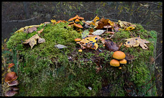 Moss, Leaves and Mushrooms on a Tree Stump