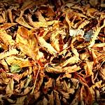 Autumn in Ashton Park, Preston - 2