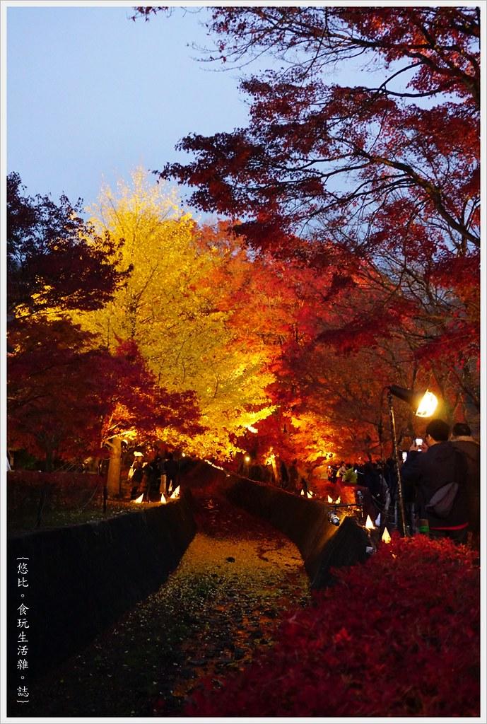 紅葉迴廊-紅葉祭-夜楓-5