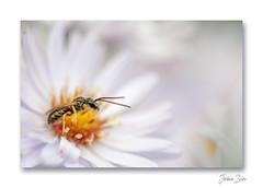Bain de nectar ...