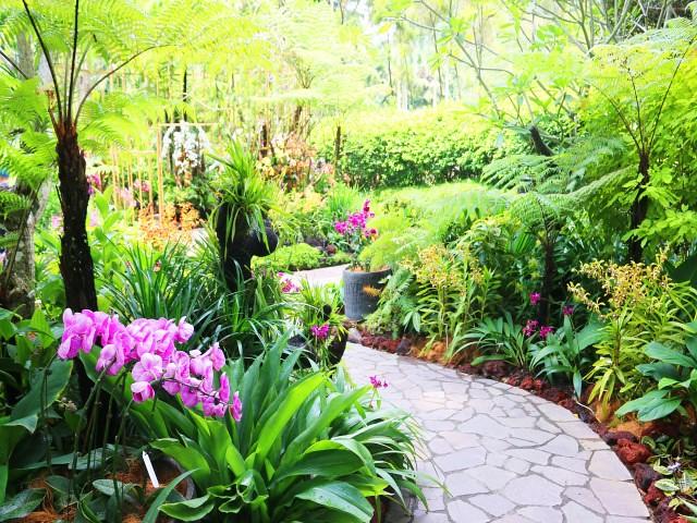 gradina orhidee Gradini si Parcuri din Singapore 4