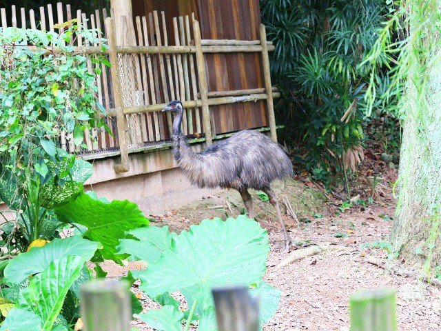jurong bird park Gradini si Parcuri din Singapore 2