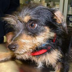 Cani in adozione: quattro nuovi esemplari ospitati nel Canile Sanitario