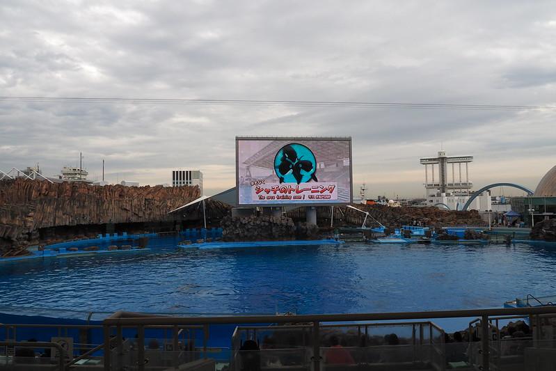 名古屋港水族館メインプール
