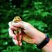 Muscardinus avellanarius [HAZEL DORMOUSE] England 19-06-2017