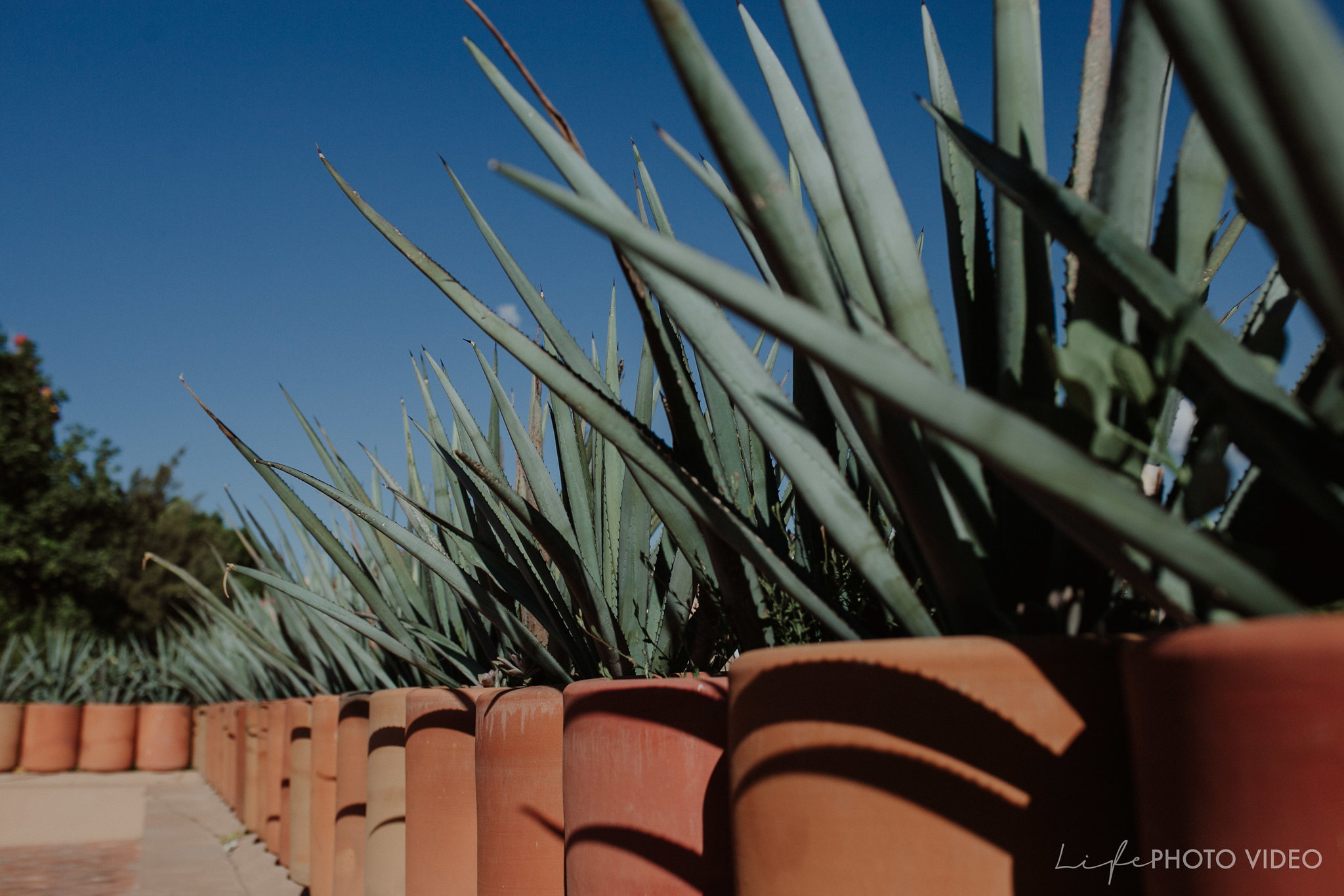 San-Miguel-de-Allende-elopment-Marlene-Patrick_0025
