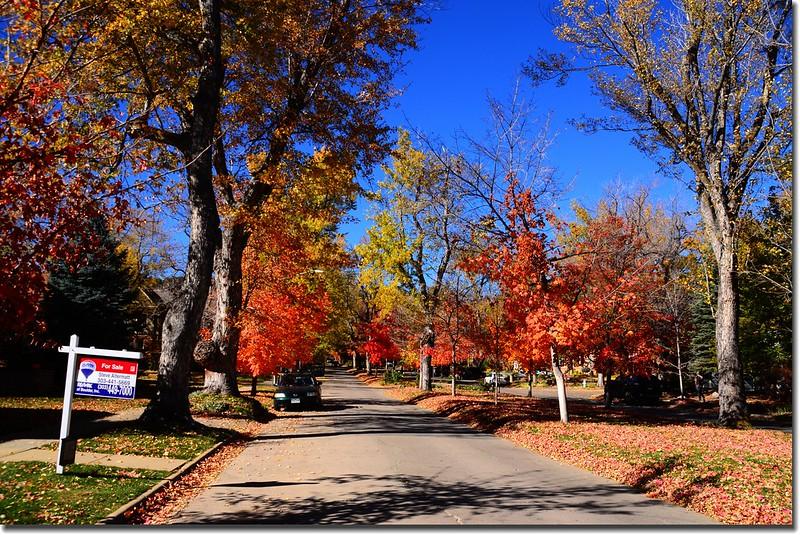 2017 Maple in Fall, Boulder, Colorado  (47)