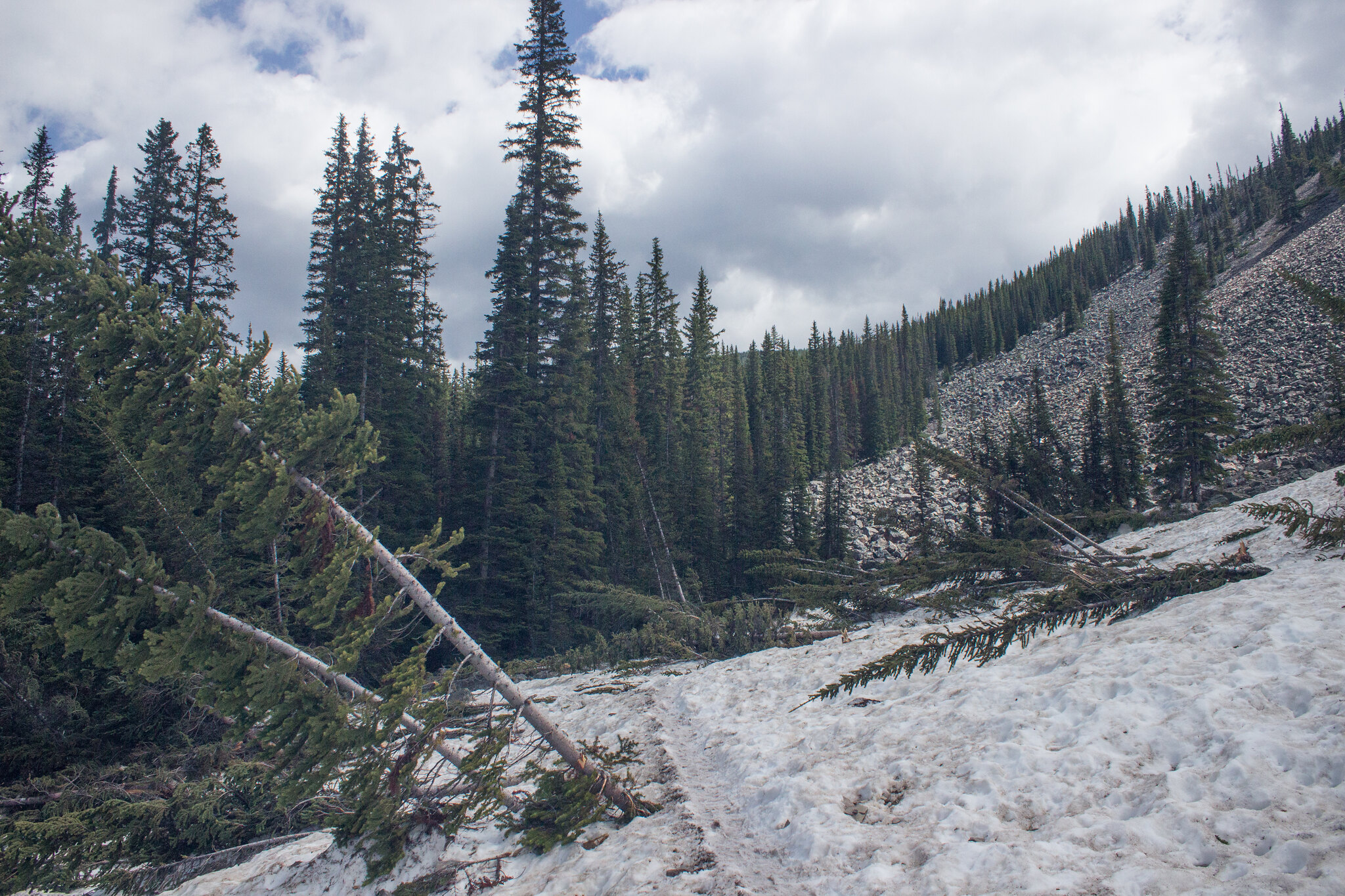 Snow covered trail to Consolation Lakes