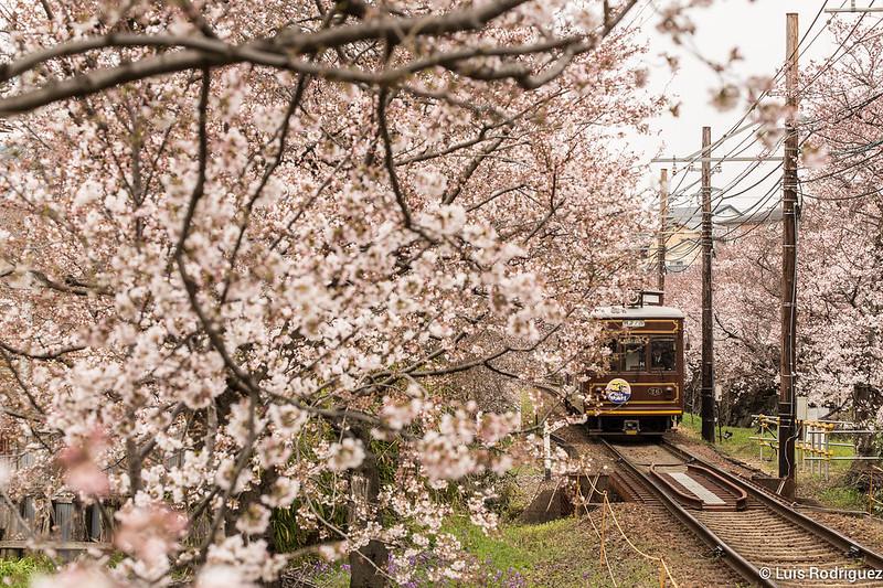 Tunel-Sakura-Kioto-Randen-17