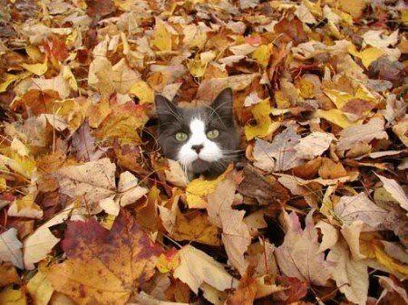 Опале листя кіт