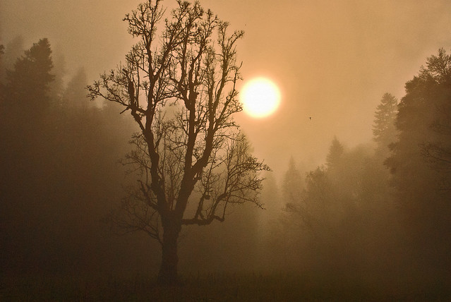 In the fog, Swiss autumn time, Combe Grède. Canton of Bern. Switzerland. No. 339.