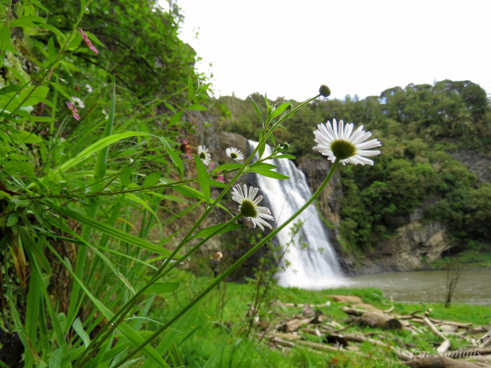 Hunua waterfalls